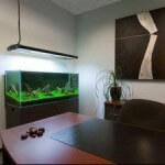 Все про услугу по профессиональной чистке аквариумов в офисах организаций города Сургут
