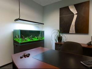 профессиональная чистка аквариумов в офисных помещениях