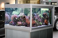 мойка и чистка аквариумов для организаций